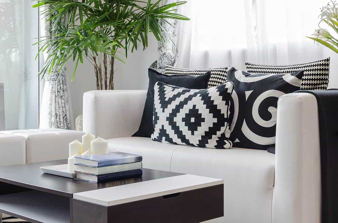 Modern black and white living room at home with house plants