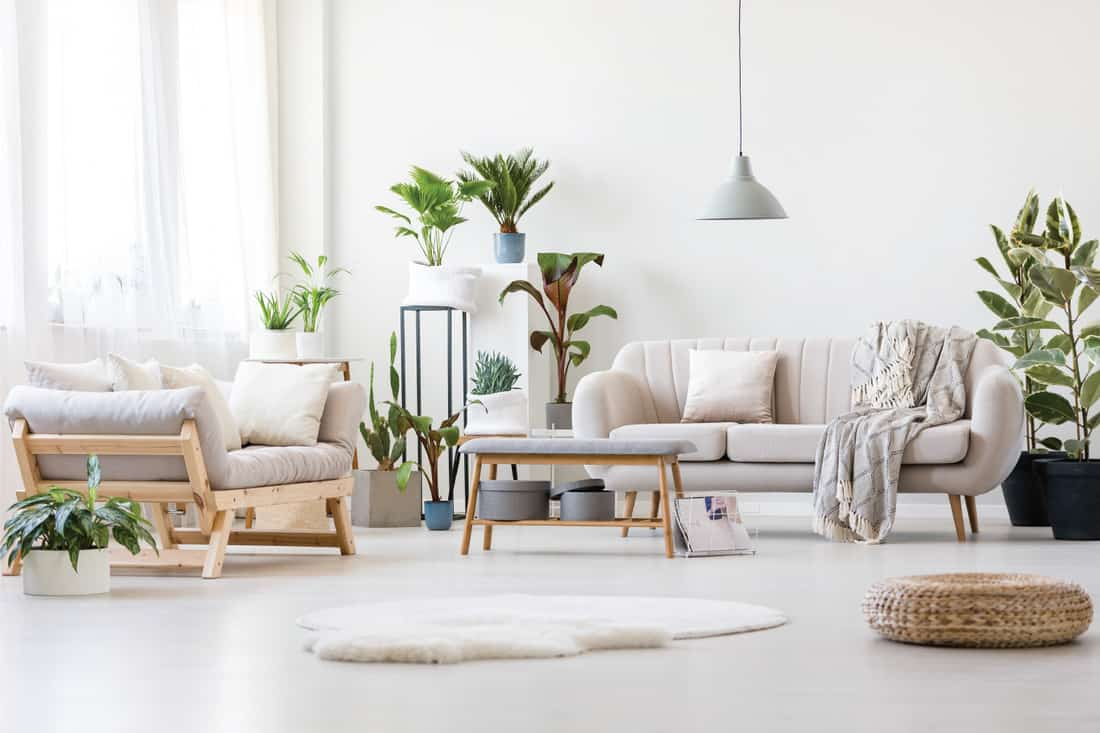 Pouf and white fur in spacious floral living room interior with wooden bench, beige sofas and plants. furniture among plants