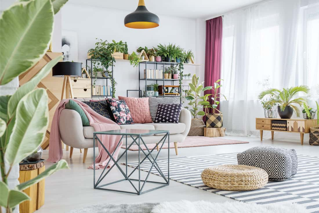 Poufs on striped carpet in spacious living room interior with plants and table next to sofa with pillows. plants everywhere