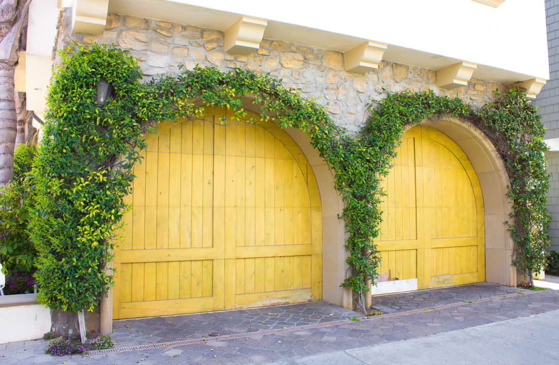Two yellow arched garage doors with plants all around