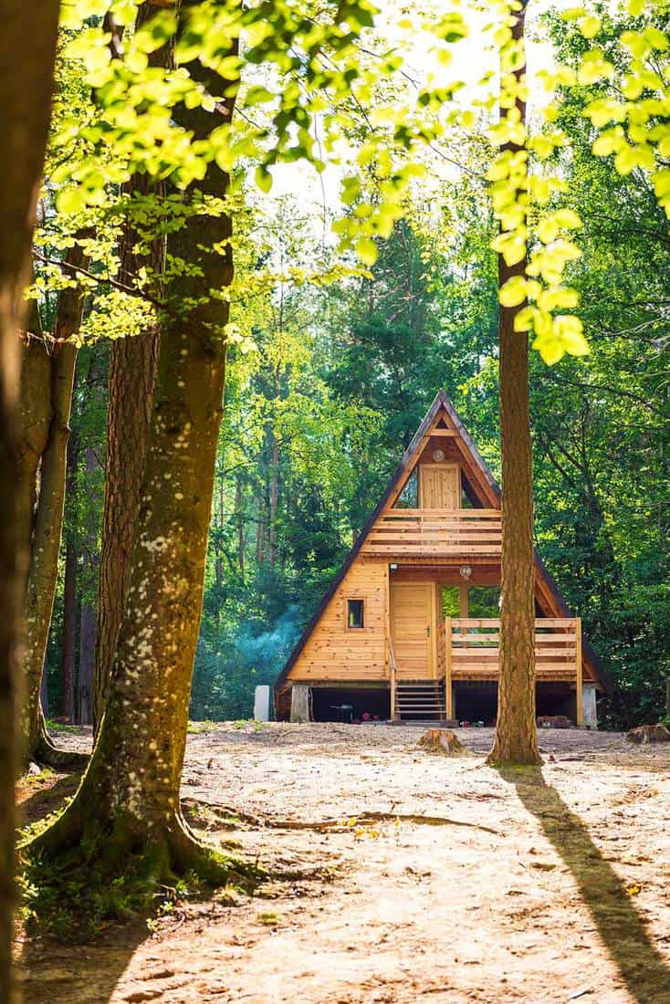 Wooden house in a tranquil forest scene