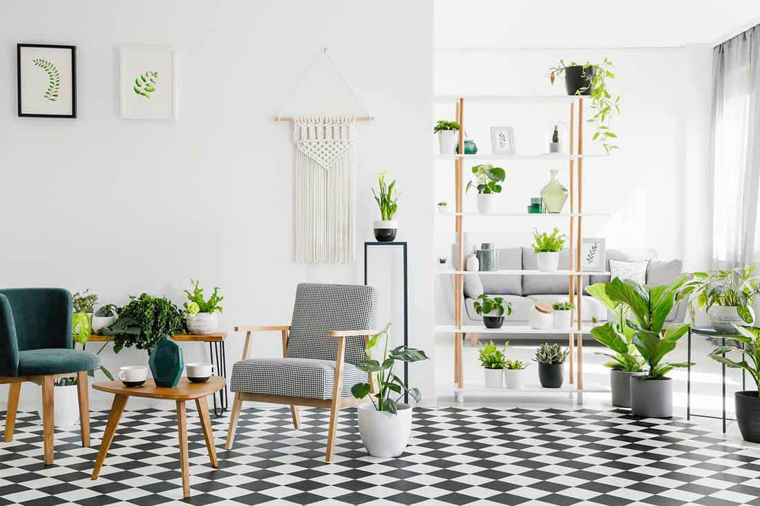 Wooden table between armchairs on checkered floor in living room interior with plants and posters