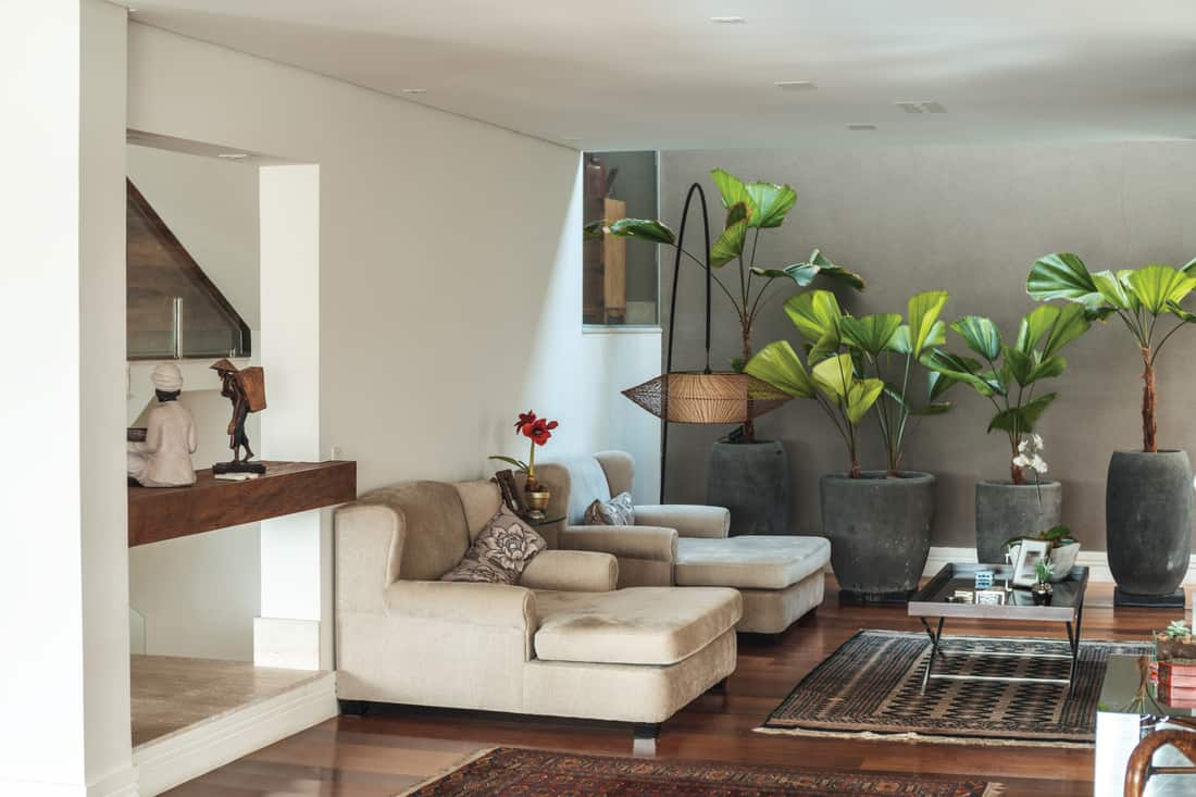 home interior with Large potted plants are along the wall perpendicular to the chairs