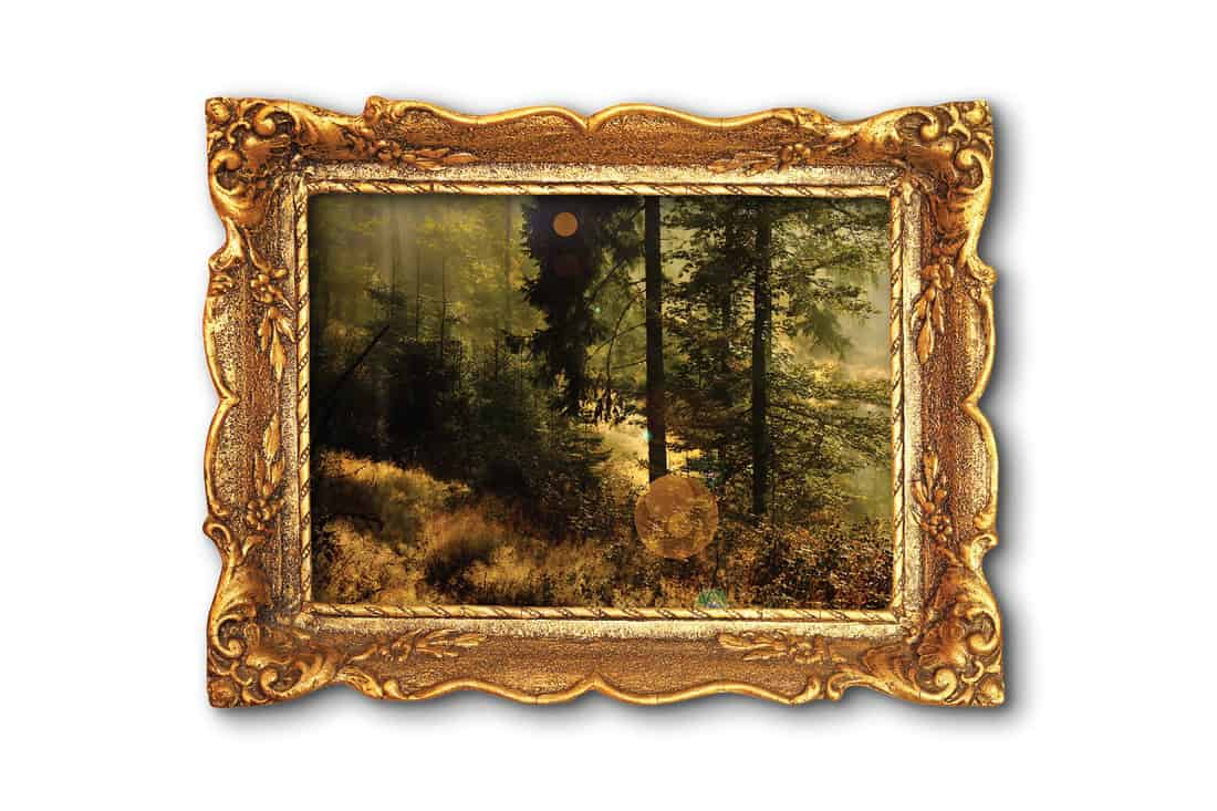 image of beautiful misty forest in wooden painting frame over white background