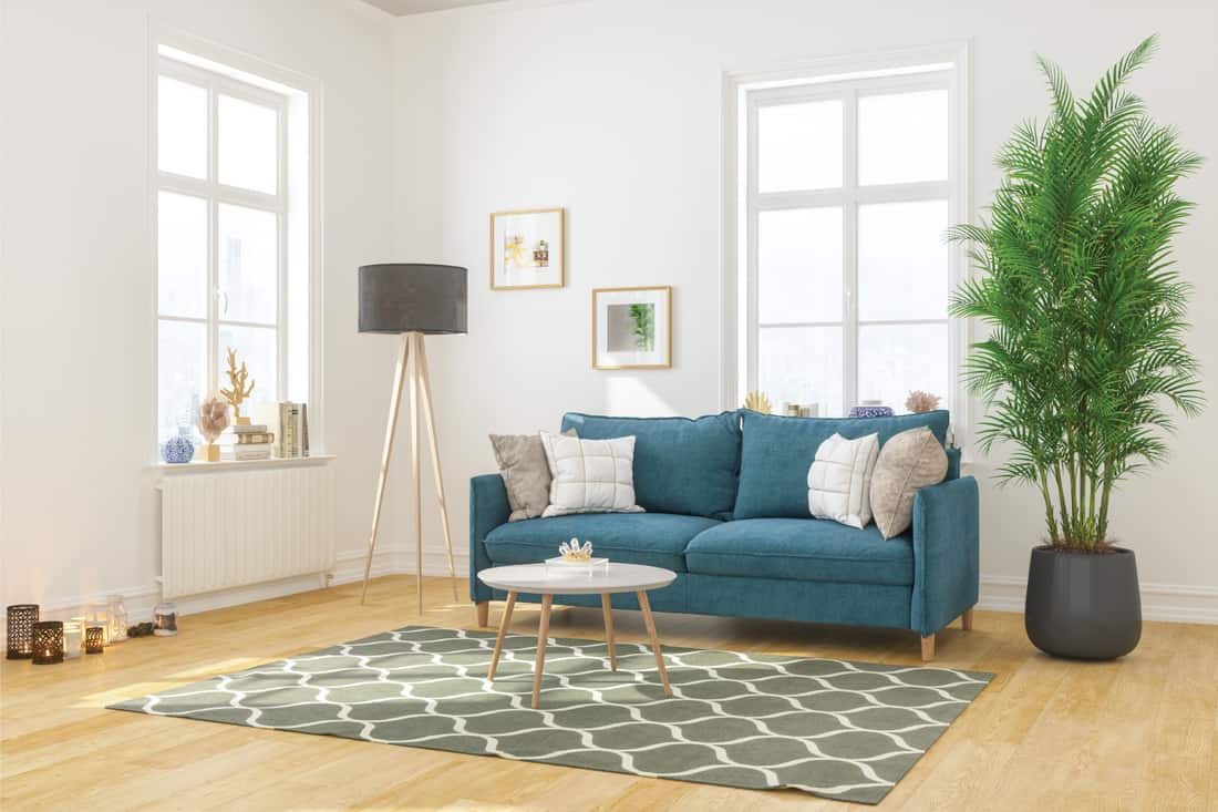 modern comfortable living room with Large plant adjacent to sofa, floor lamp, framed artwork on the walls