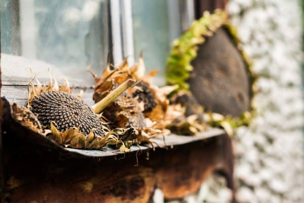 Read more about the article How To Dry Sunflowers [A Complete Guide]