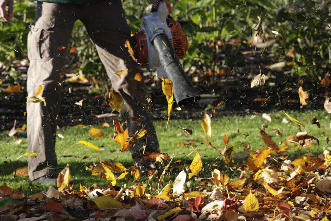 Artificial wind leaf blower blows autumn leaves