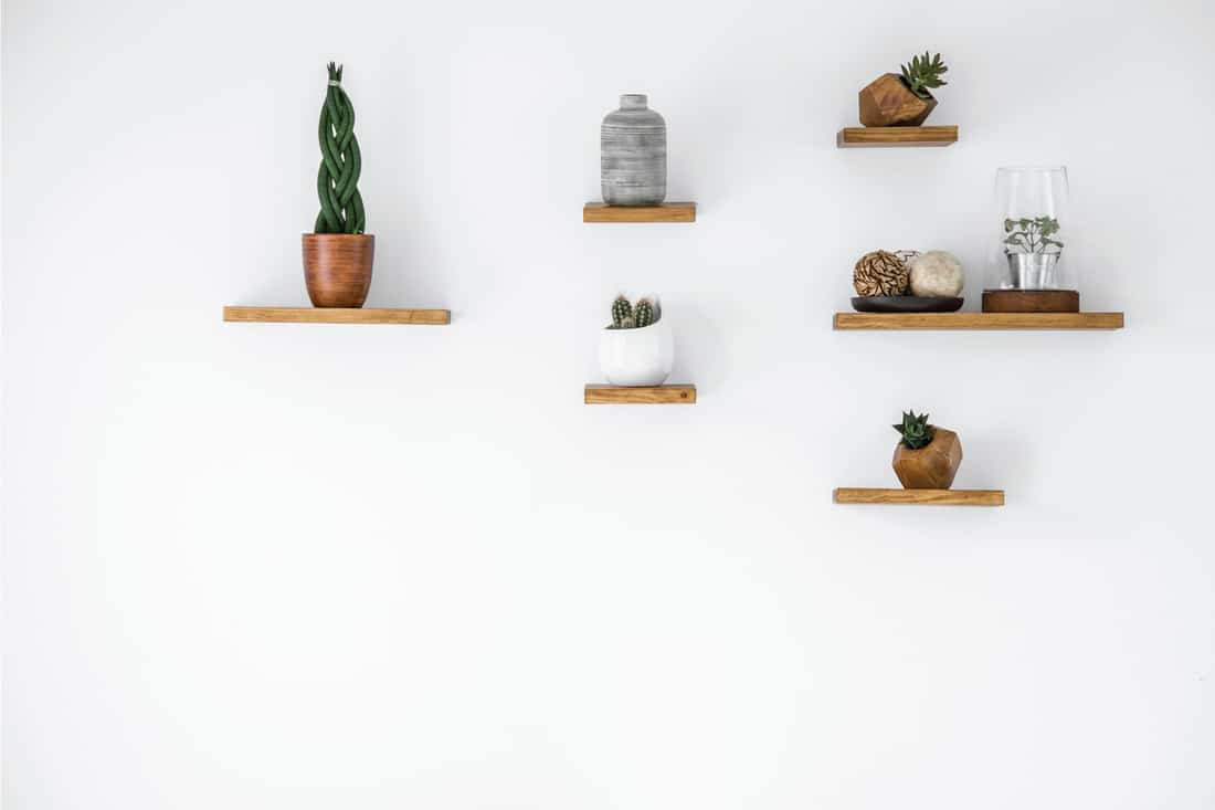 Cacti on wooden small floating shelves in empty interior on white wall