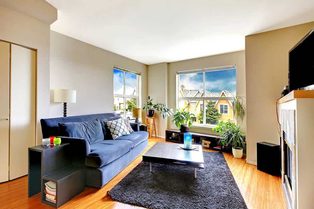 Cozy living room with soft rug and many plants
