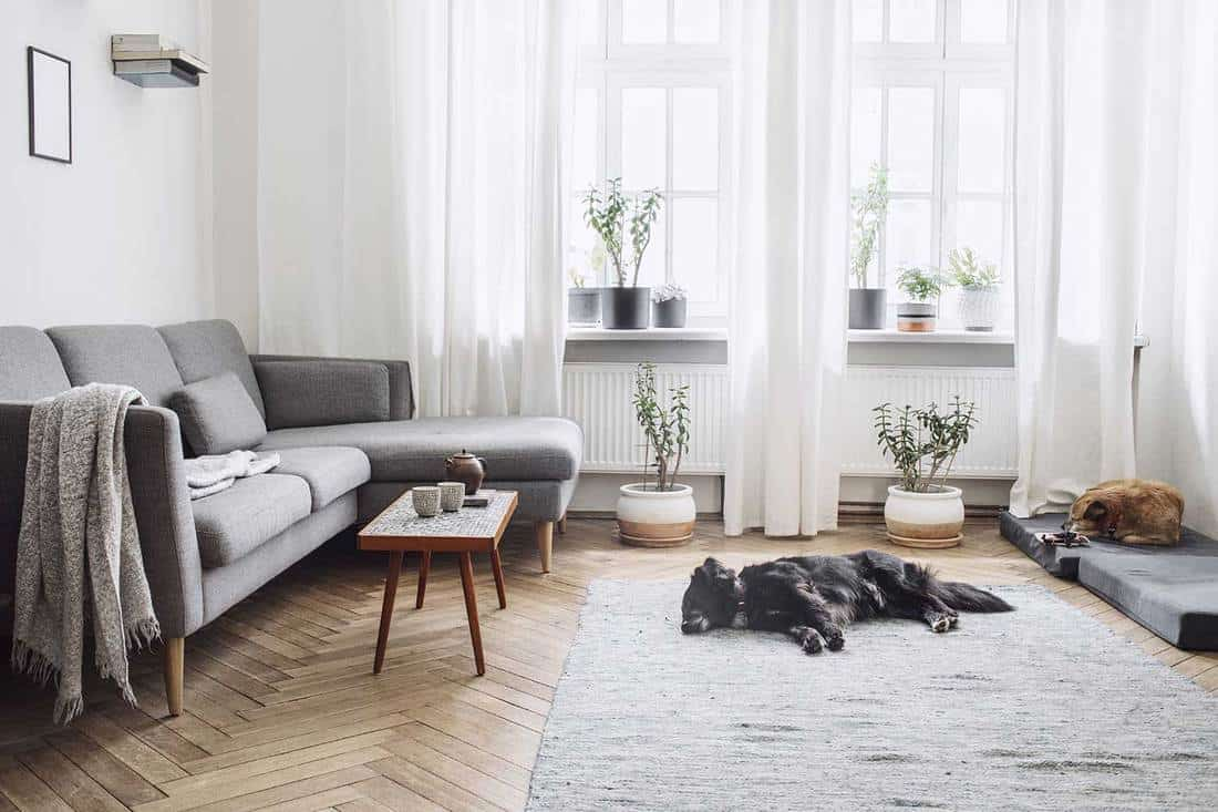 Design interior of living room with small design table and gray L shaped sofa