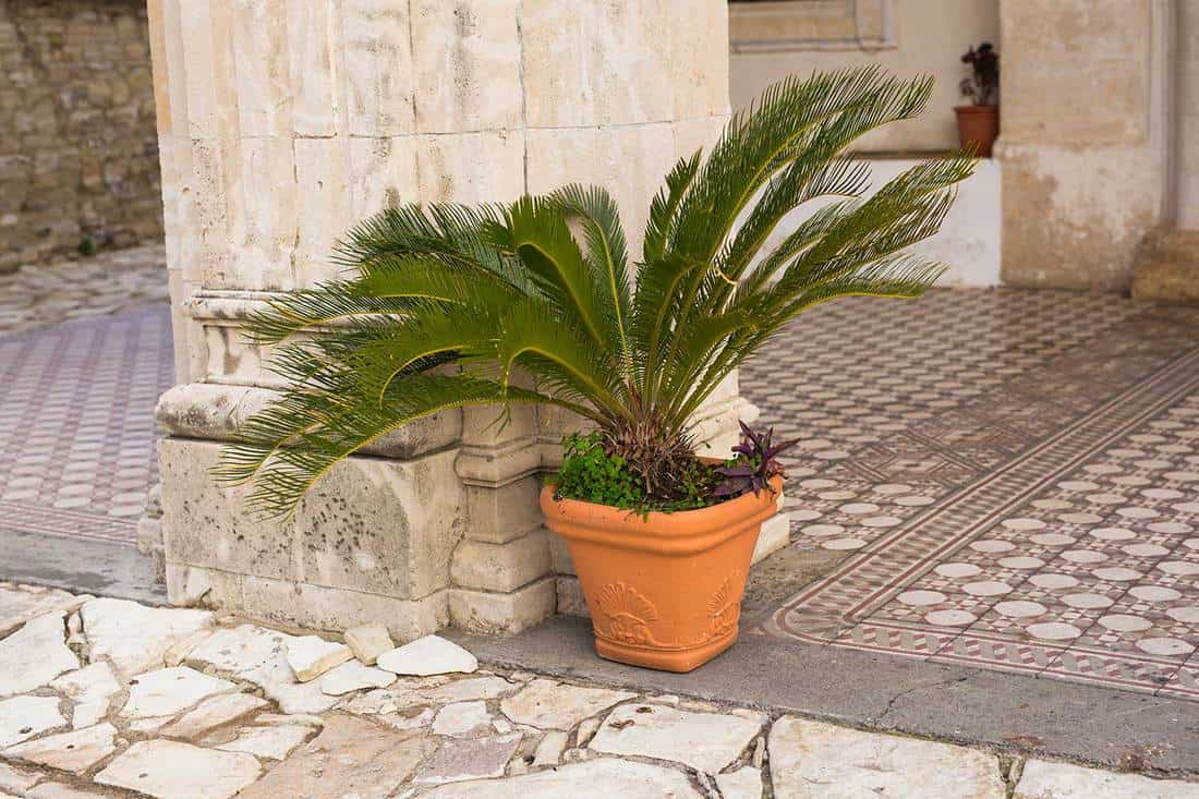 Green potted plants outdoor
