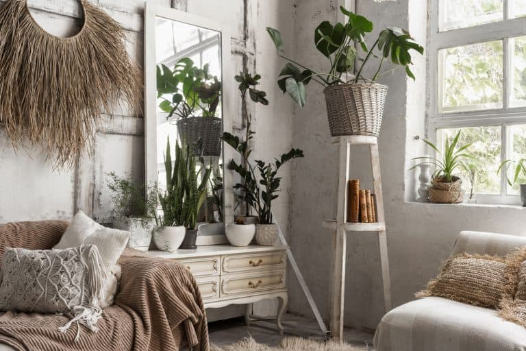 Indoor plants inside a Boho themed living room with drapes and a mirror on the side, 10 Best Tall Plants For The Living Room