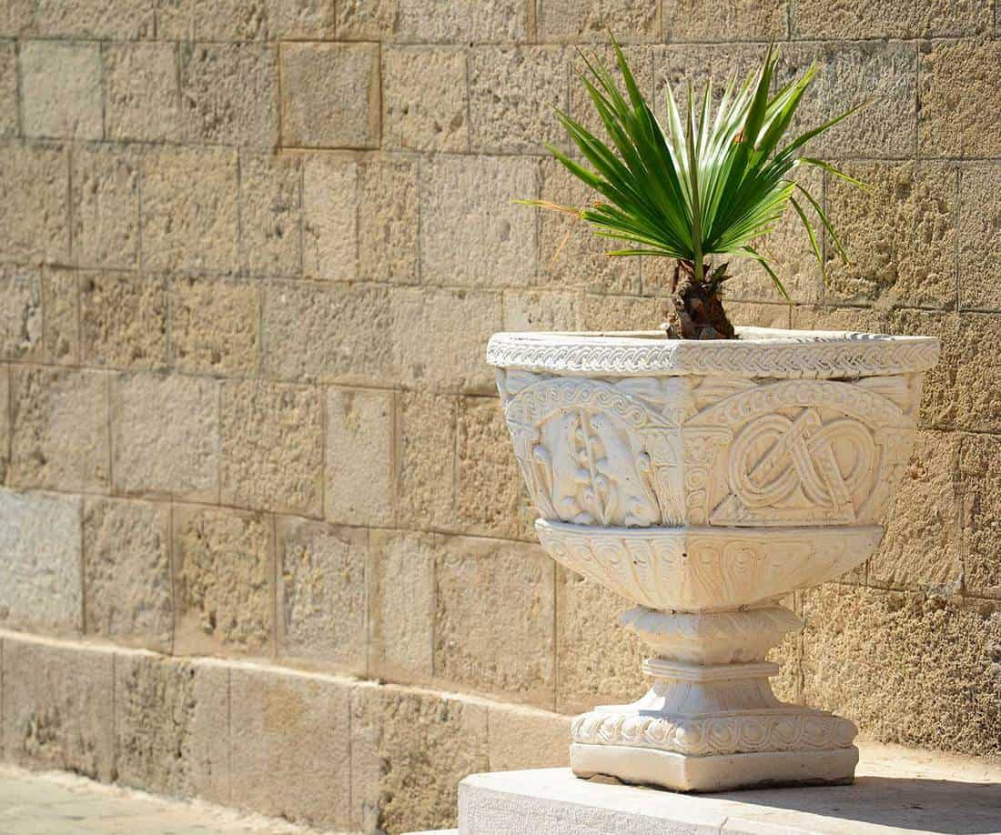 Palm tree in stone vase outdoors