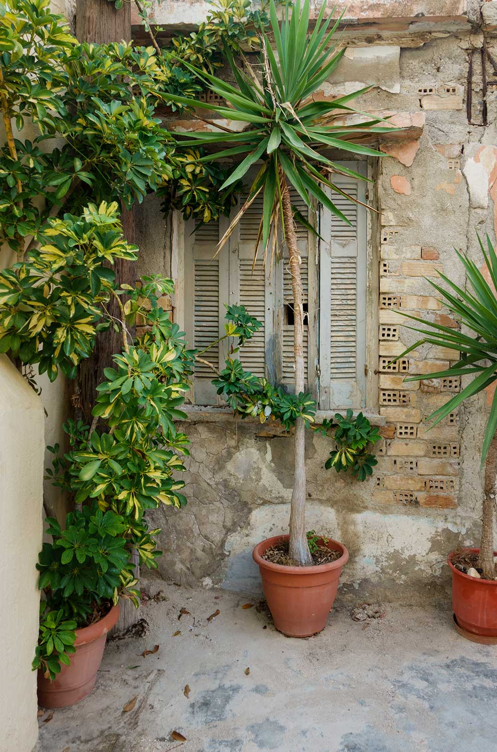 Potted plants in front of ruined wall