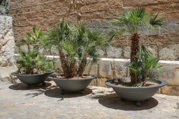 11 Amazing Potted Palm Trees Ideas