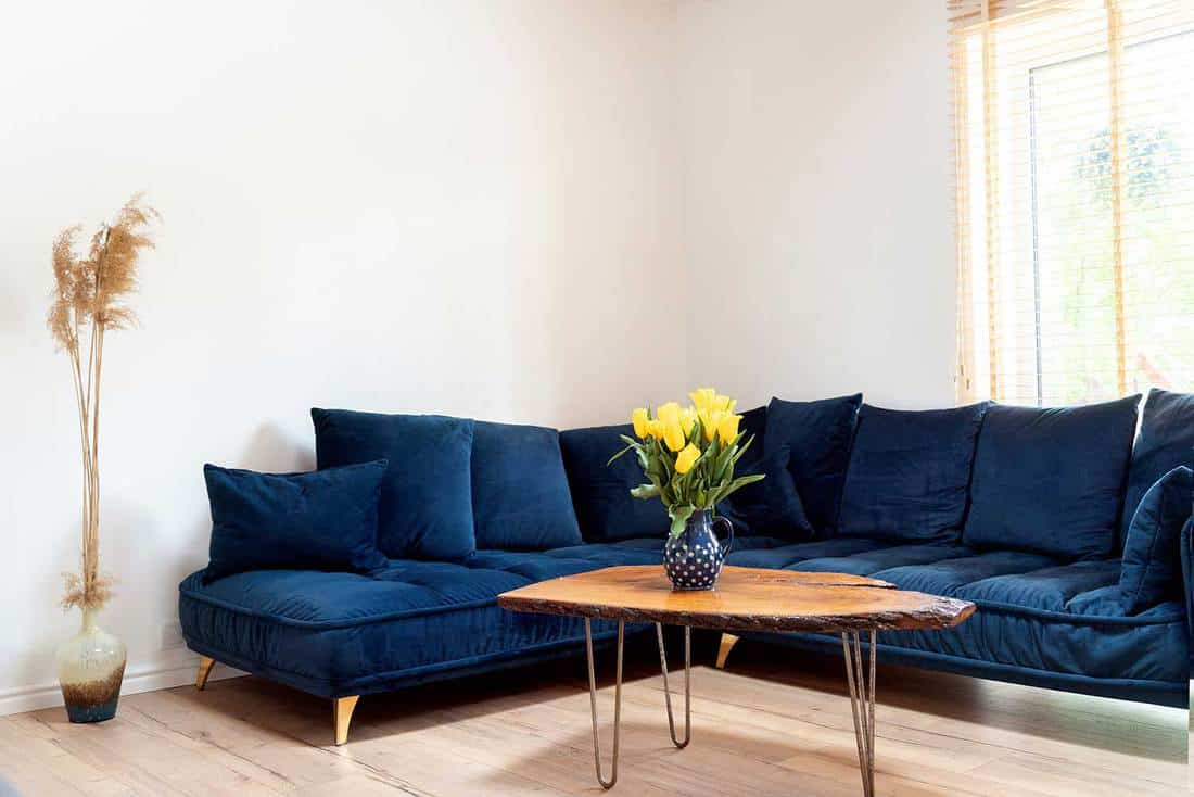 Stylish boho living room interior with design navy blue sofa and wooden handmade coffee table