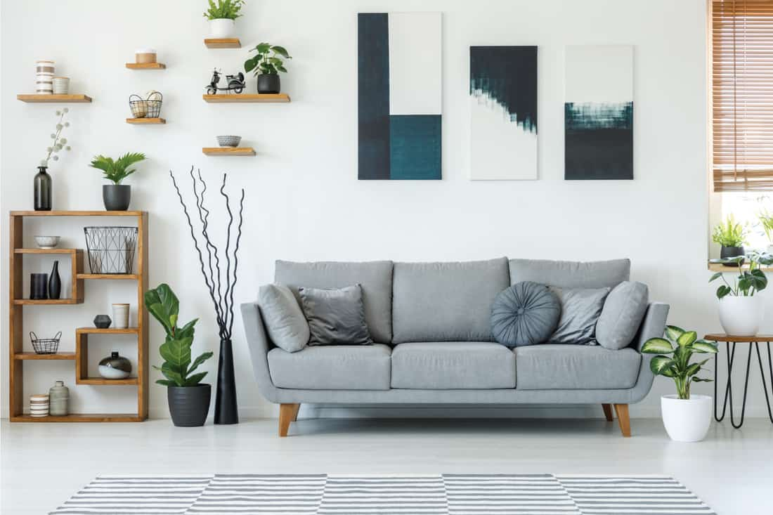 elegant living room interior with a comfy couch, paintings and shelves as wall decor