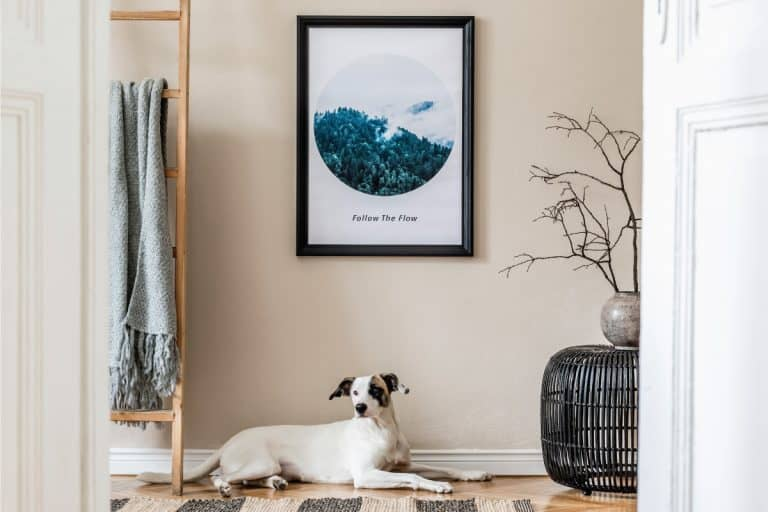 picture-hung-on-the-wall-with-dog-on-the-floor.-11-Types-Of-Picture-Hangers