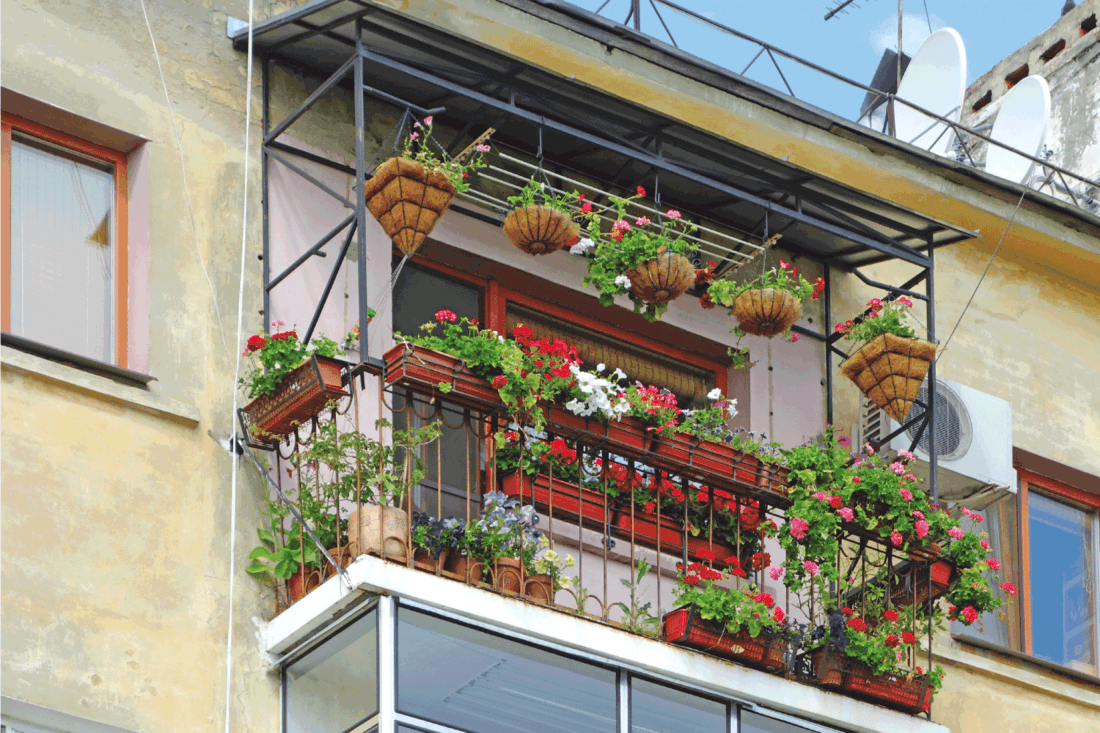 Balcony with flowers. plants as privacy