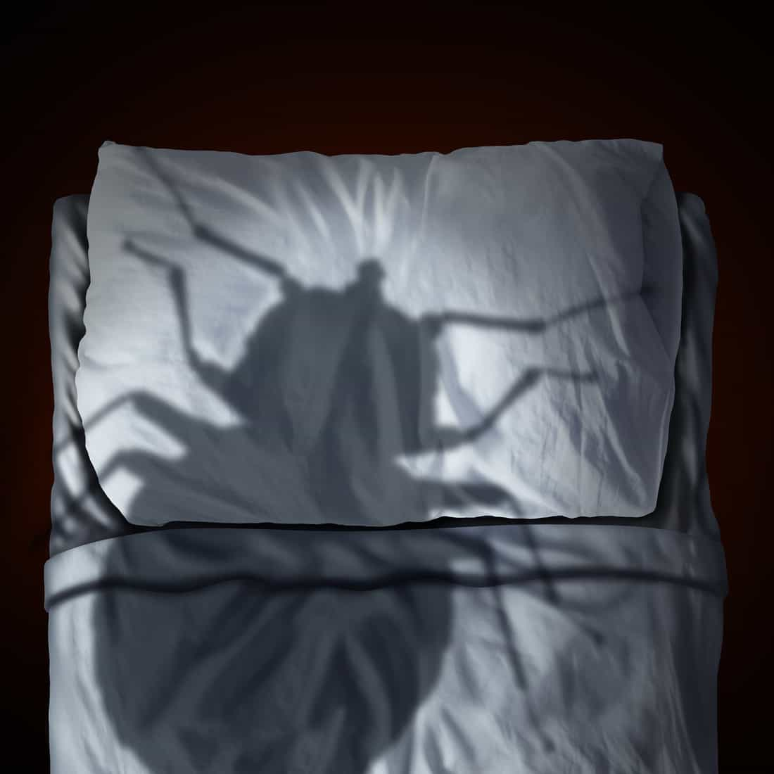 Bed bug fear or bedbug worry concept as a cast shadow of a a parasitic insect pest resting on a pillow and sheets as a symbol and metaphor