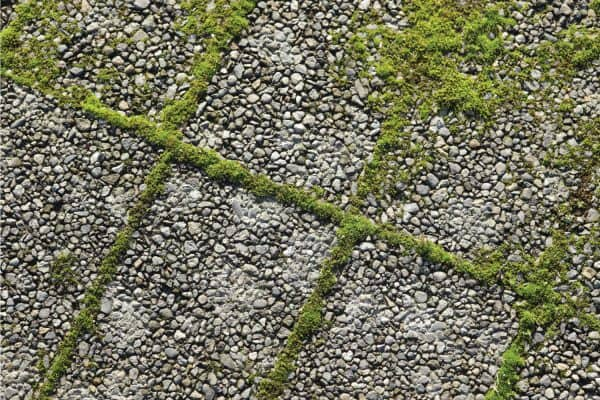 How To Get Rid Of Moss On Driveway In 6 Easy Steps