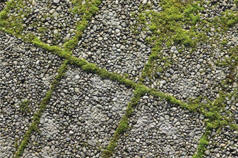 Green moss sprouts up between paving stones. How To Get Rid Of Moss On Driveway In 6 Easy Steps