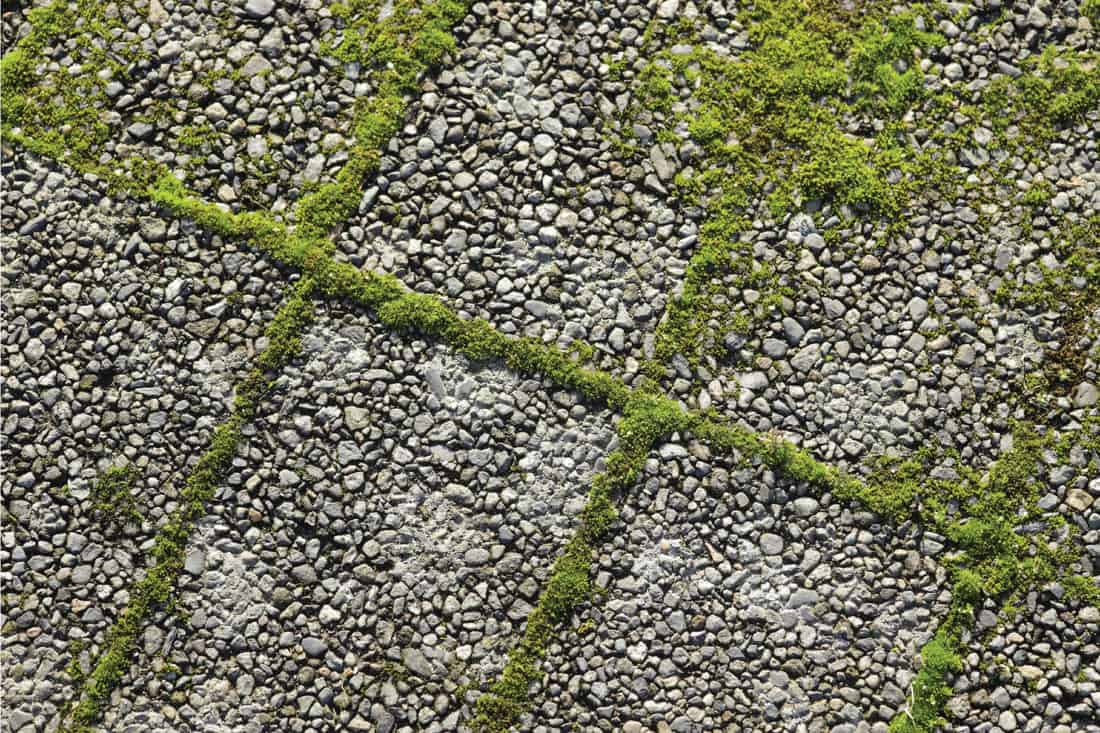 Green moss sprouts up between paving stones.