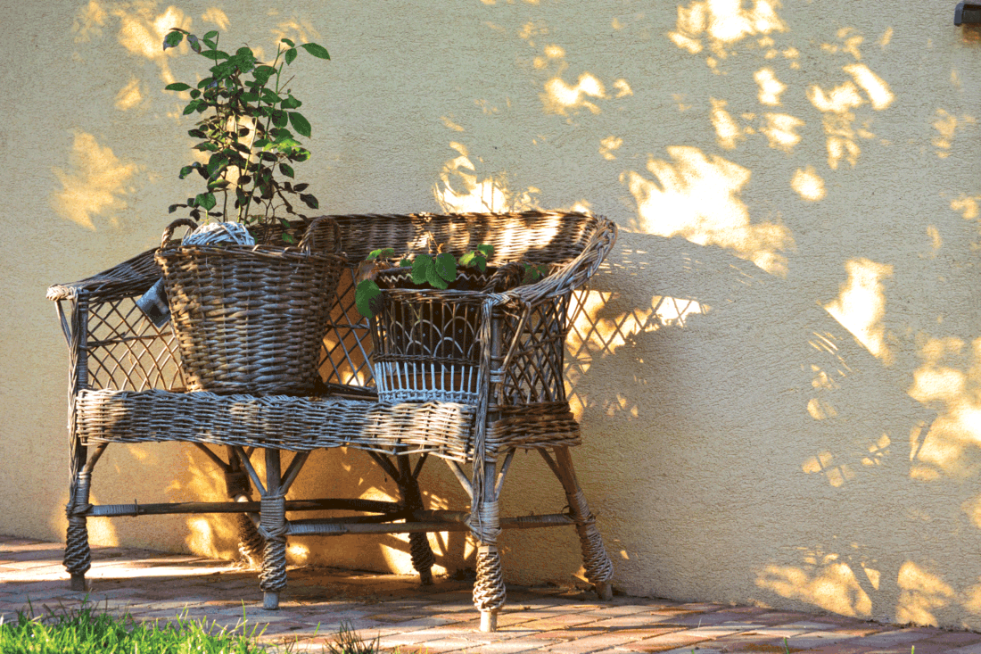Still life. Light and shadow play. Old rattan bench with same rattan flower pots with green plants on a yellow wall