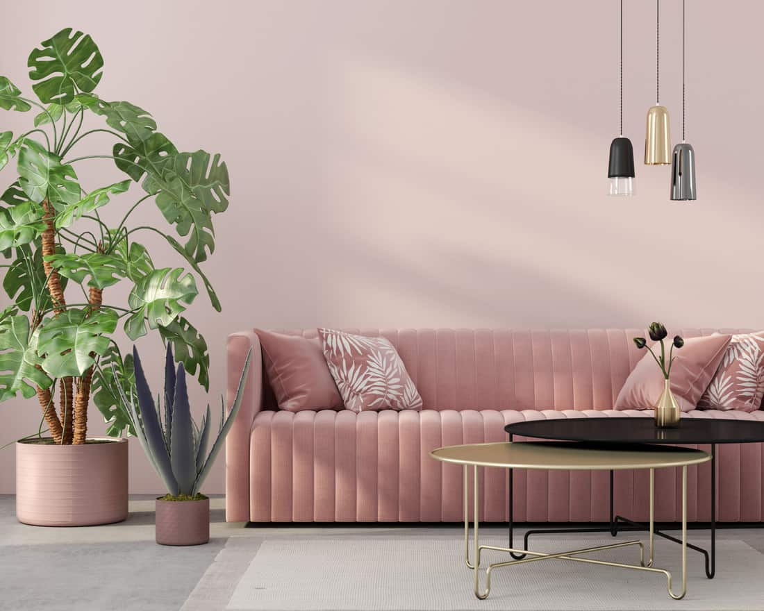 Stylish living room interior in pink with a concrete floor, velvet sofa, golden table, chandeliers and tropical plants