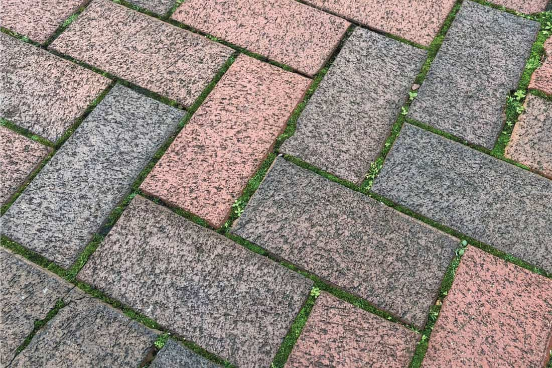 weathered red and grey block paved driveway laid in a herringbone pattern with green moss growing between the bricks