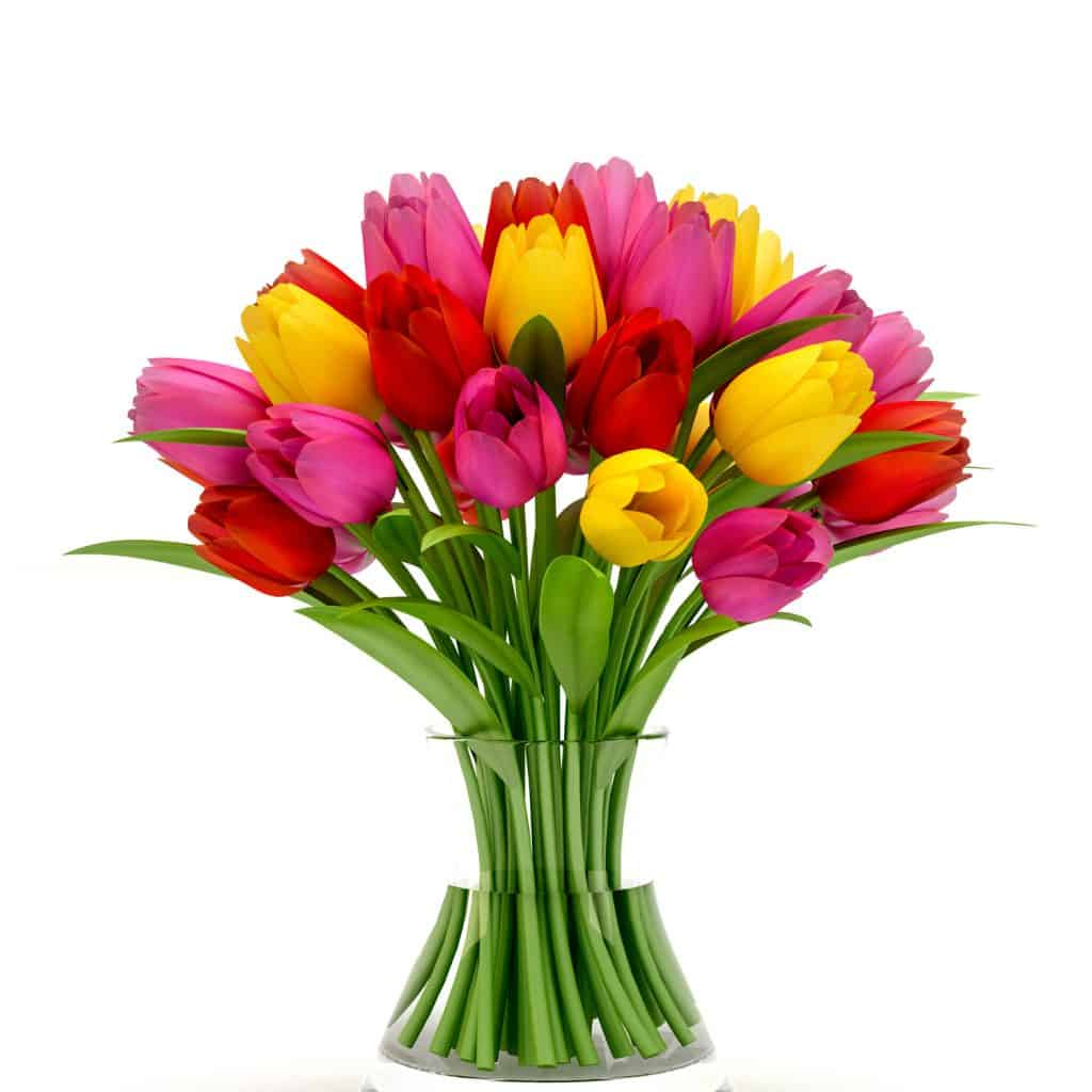 A beautiful different colored tulip bouquet on a white background