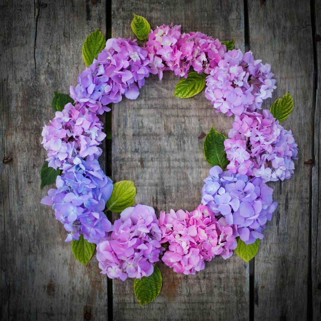 Hydrangea flower frame