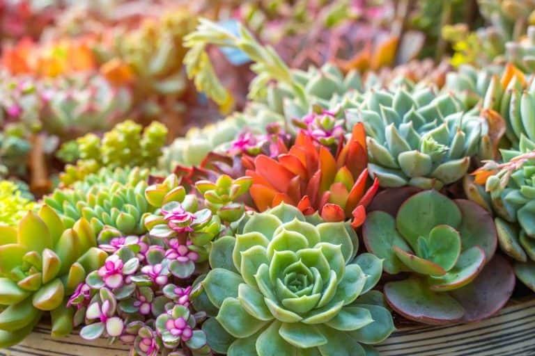 Miniature succulent plants in garden pot, 15 Beautiful Succulents And Cactus Arrangement Ideas