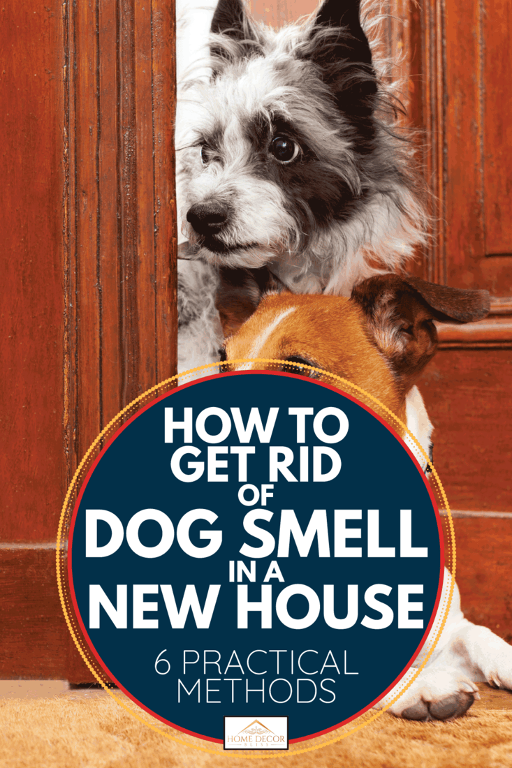 Nosy dogs at the door. How To Get Rid Of Dog Smell In A New House [6 Practical Methods]