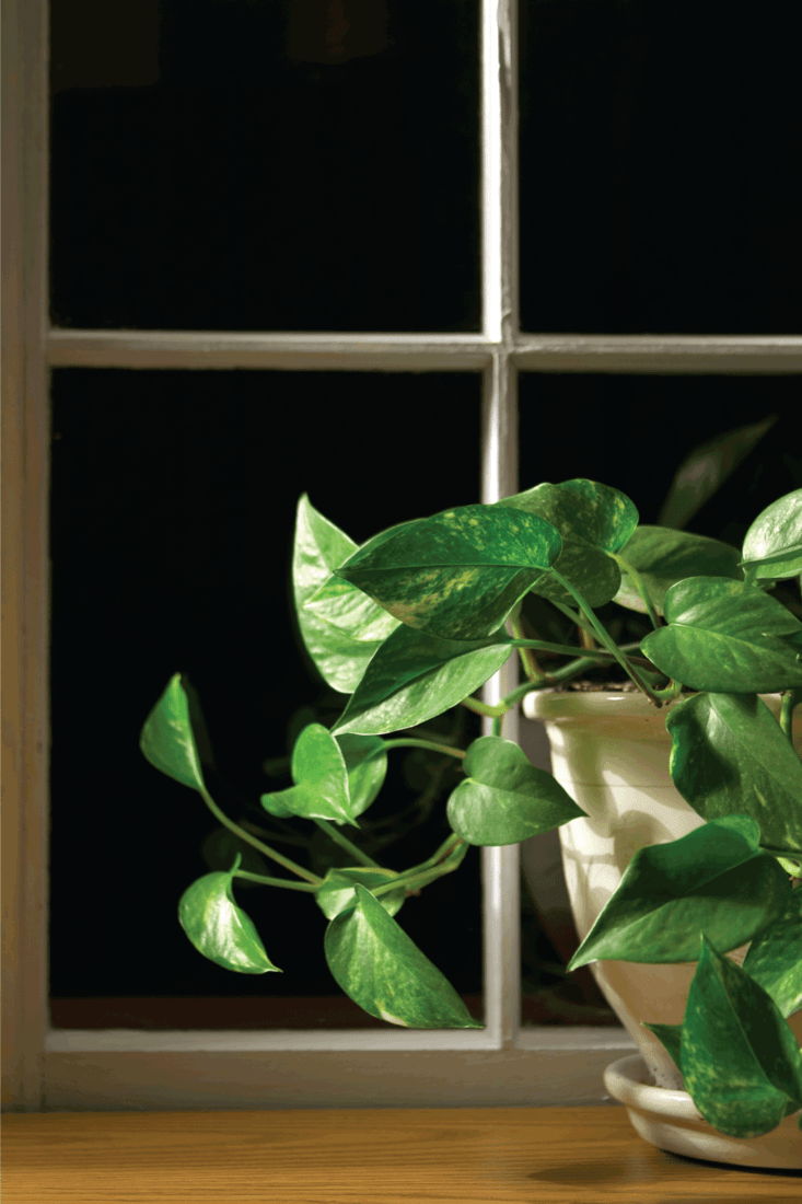 Philodendron with moody lighting