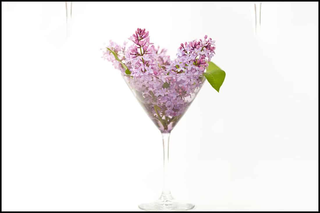 Purple Lilac in a Martini glass