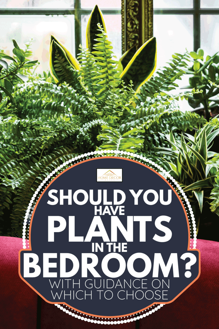 Stylish interior filled a lot of plants. Should You Have Plants In The Bedroom [With Guidance On Which To Choose]