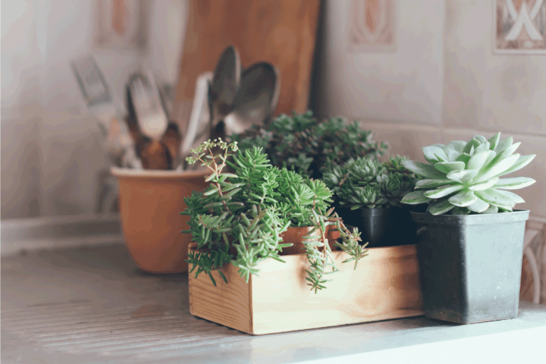 Succulents in a wooden box. Should You Have Plants In The Bedroom [With Guidance On Which To Choose]