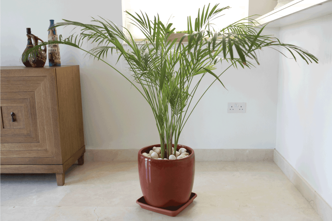 bamboo palm in a pot in the bedroom