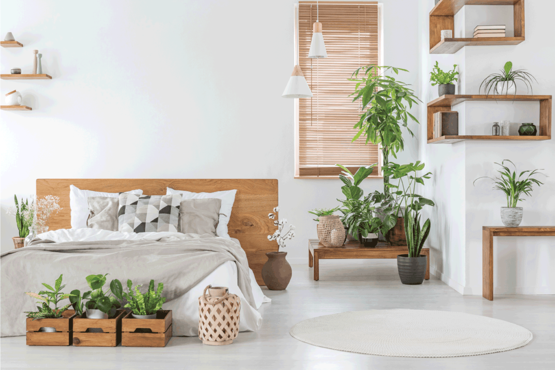 botanical bedroom interior with wooden shelves, tables, double bed, plants and empty wall next to a window with blinds