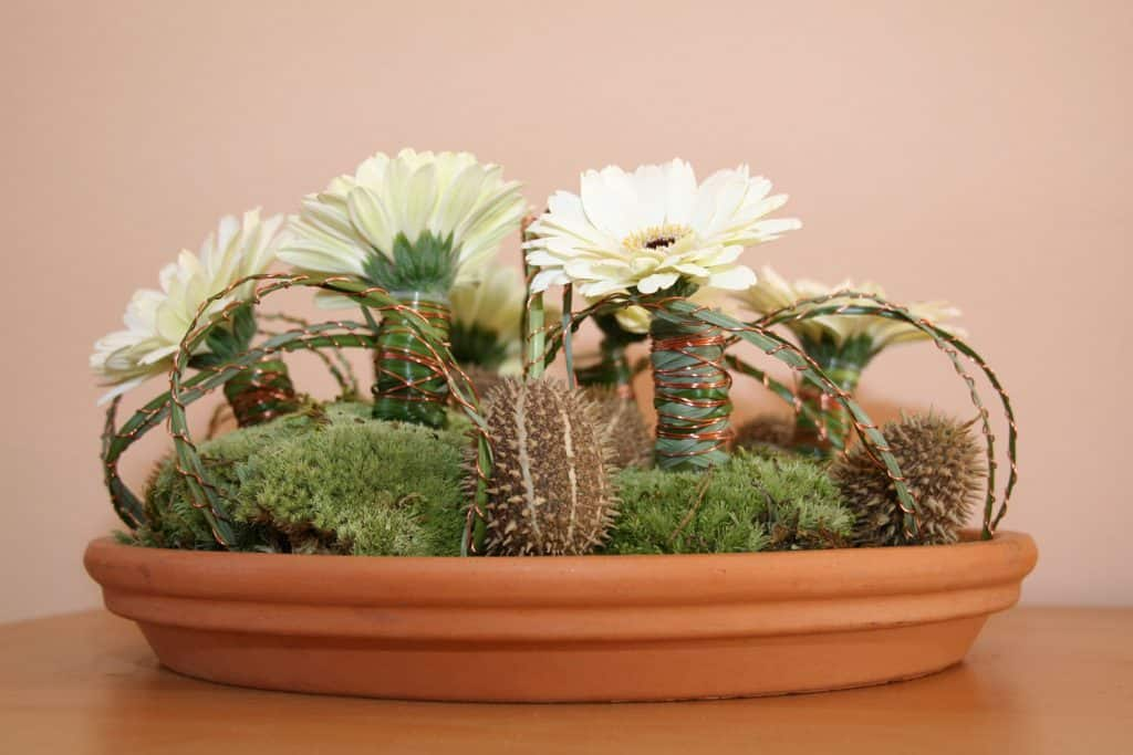 A Gerbera daisy decorated with succulents and small grass planted on a clay pot