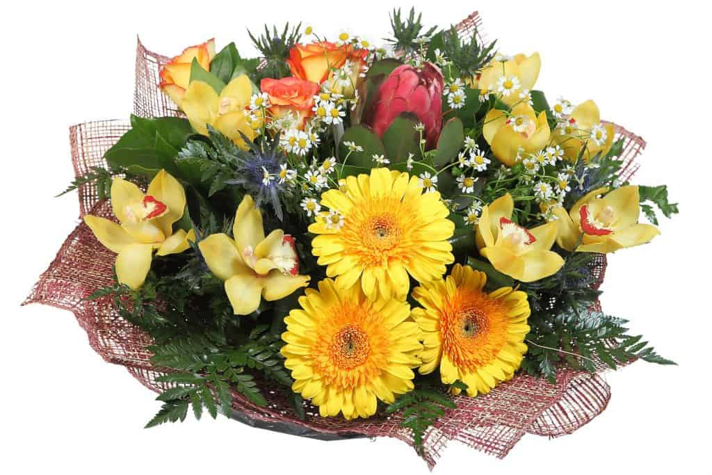A gorgeous bouquet of mixed pale yellow and green leaves arranged on a white background