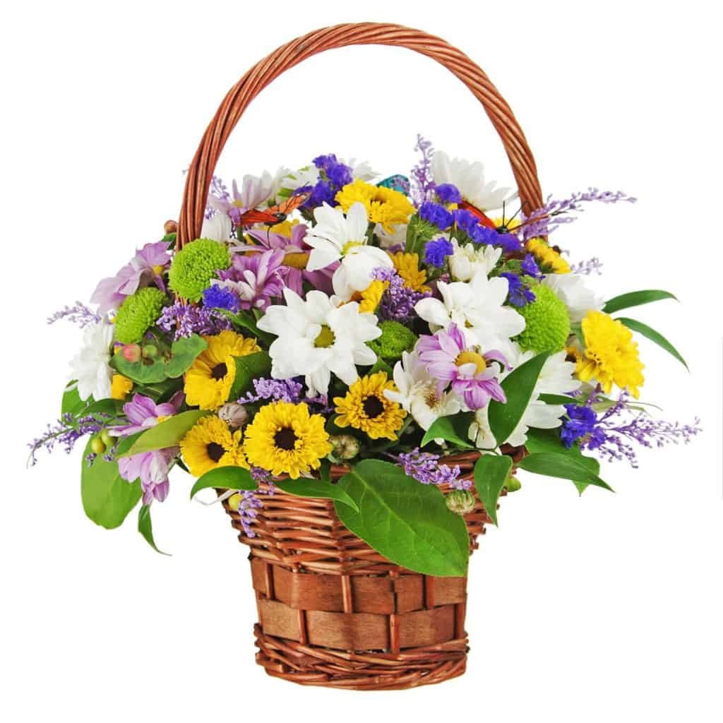 A small basket of gerbera flowers on a white background