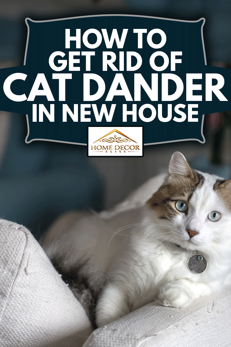 How To Get Rid Of Cute cat indoor in sofa, Cat Dander In New House
