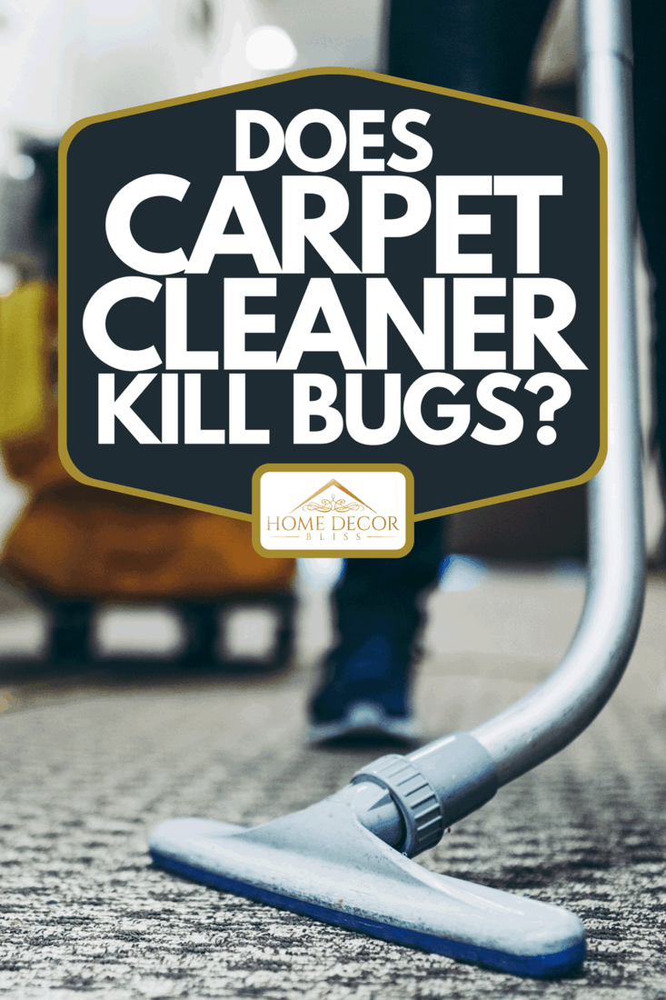 A janitor vacuum cleaning the carpet inside a hotel building, Does Carpet Cleaner Kill Bugs?