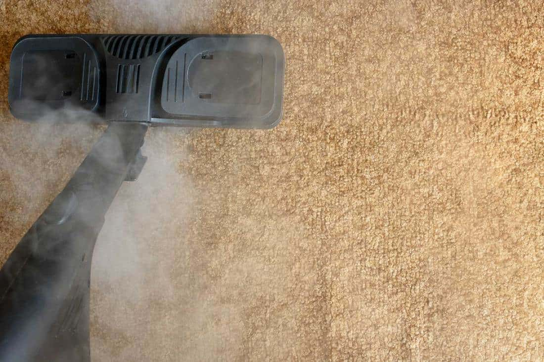 Equipment for carpet steam cleaning