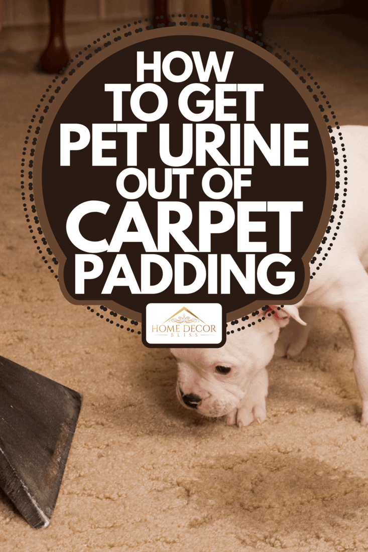 A cleaning pet urine on carpet, How To Get Pet Urine Out Of Carpet Padding