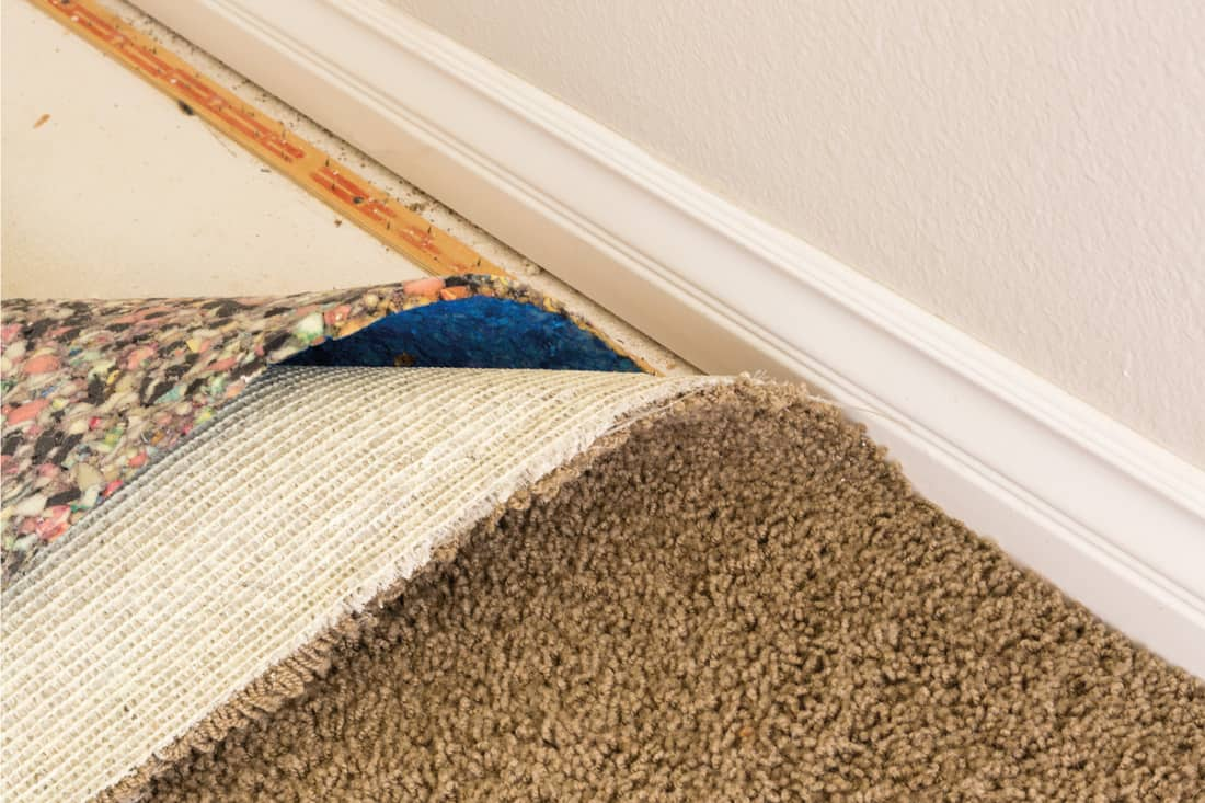 Pulled Back Carpet and Padding In Room