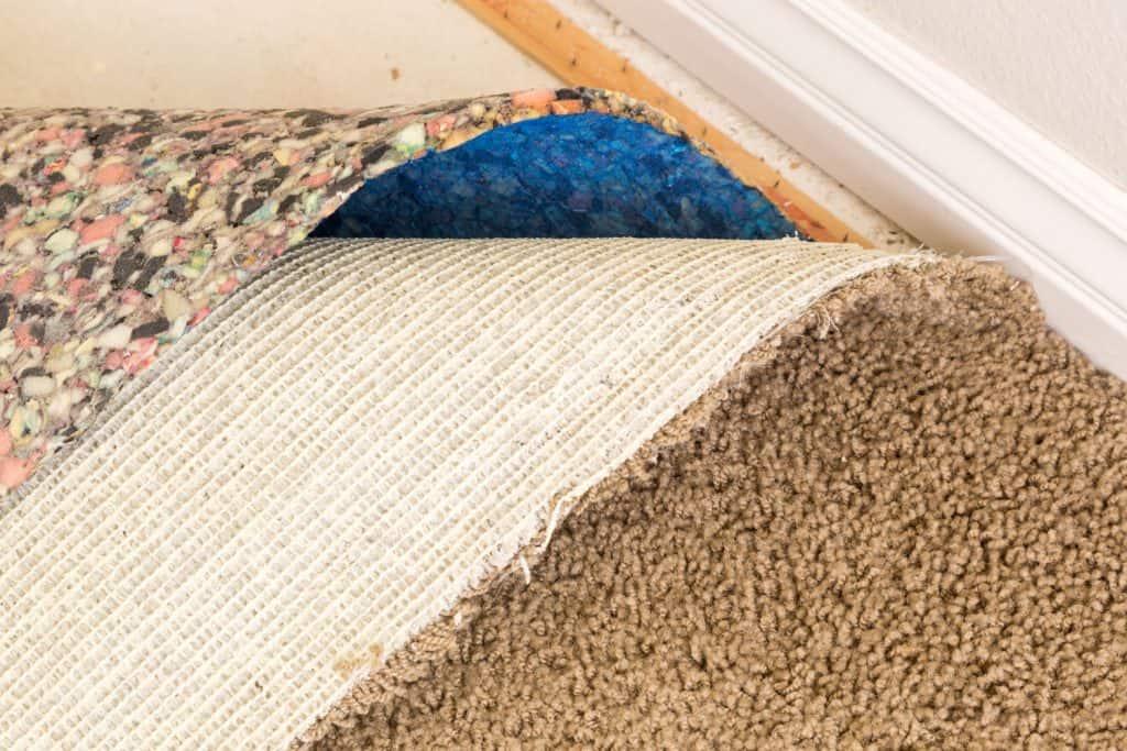 Removing brown carpet padding inside the living room