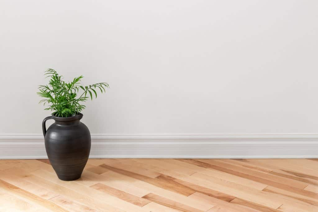 Amphora with green plant decorating an empty room.